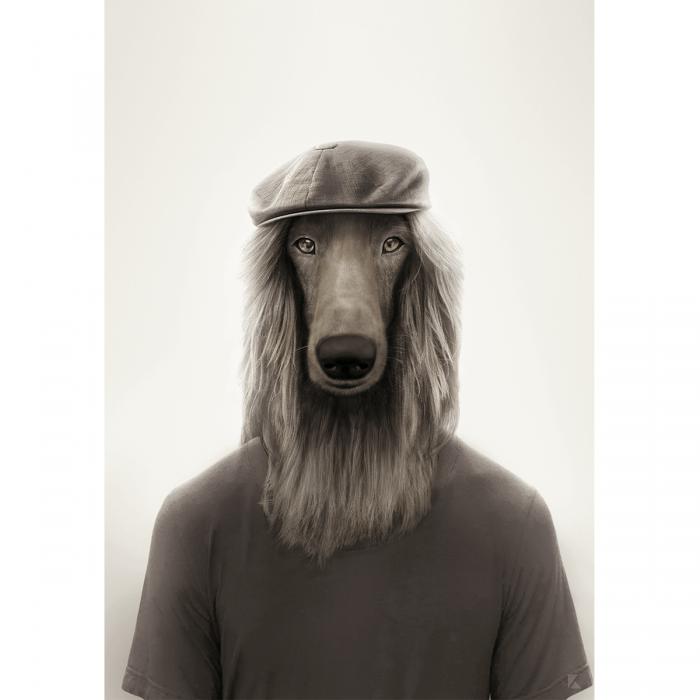 Brit Afghan Greyhound model - dog created in humanized animal portrait to decorate living room walls. Lokoloko
