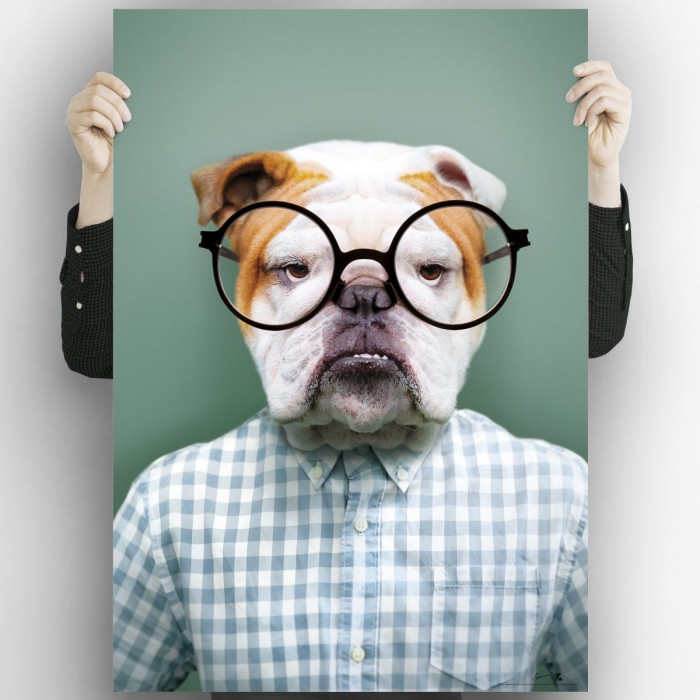 Bulldog model-poster-washable-exterior-interior-walls-frames-paintings-modern-style-lokoloko
