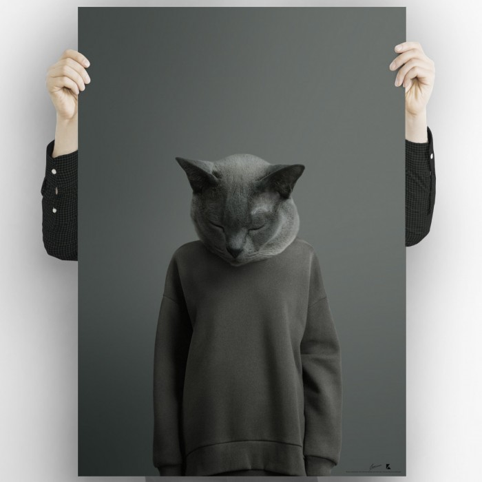 Chartreux cat model-poster-washable-high-quality-for-interior-exterior-decoration-modern-original-lokoloko