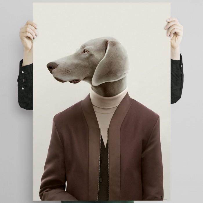 Weimaraner dog model-poster-elegant-washable-for-walls-in-interior-exterior-decoration-modern-lokoloko